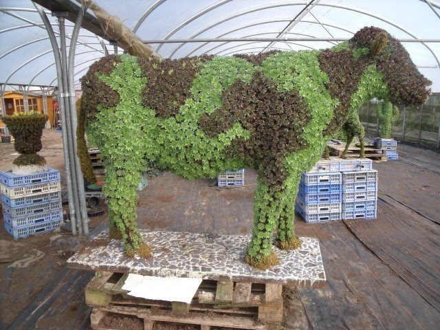 Cow Moss Topiary