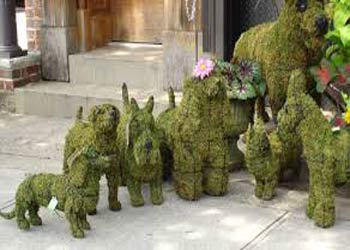 Animal Topiary Frames Garden Topiary Buy Online At