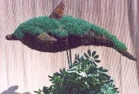 Dolphin Moss Topiary