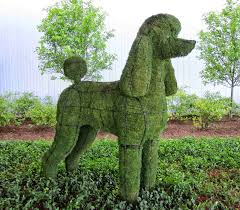 Poodle Moss Topiary