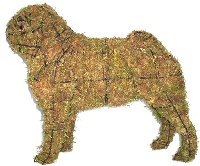 Pug dog topiary mossed